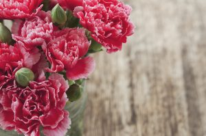 carnation for our spiritual parents, Elohim God.